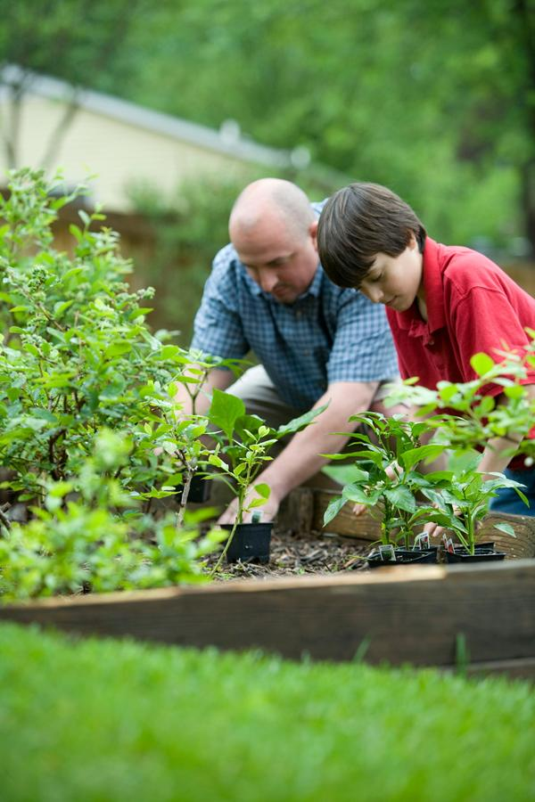 Zakupy wyrobów do roślin