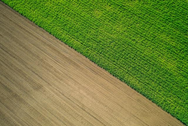 Jak wyeliminować rośliny zagrażające naszym uprawom?